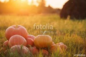fotolia_71252516